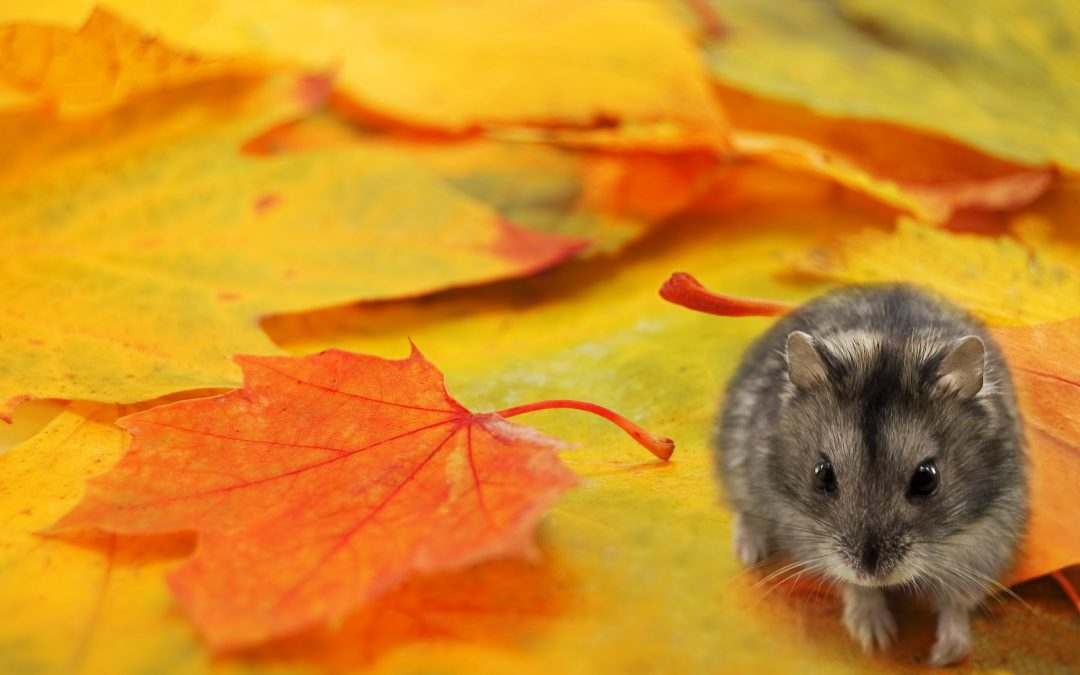 Fall is Here! But So Are These Pests (Tips for Fall Pest Control)