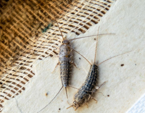 5 Pests Commonly Found on New Home Construction Sites