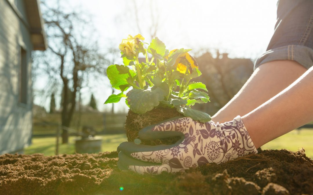 Organic Ways to Control Garden Pests this Spring and Summer