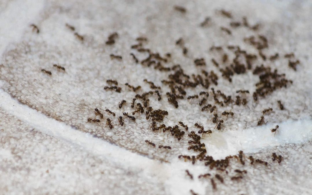 How to Keep Ants Out of Your Home this Summer (and for Good!)